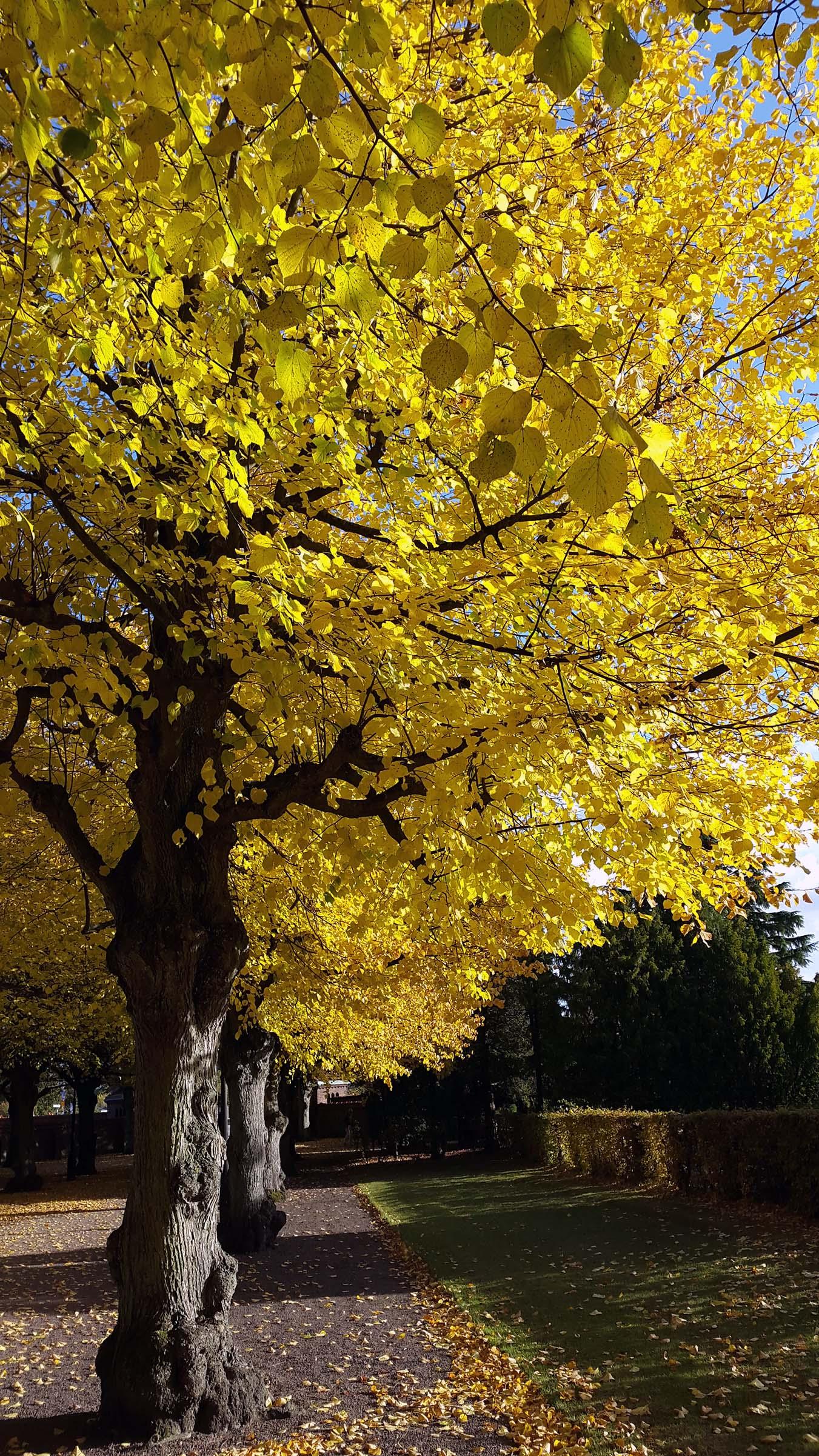 Höstens färgprakt!